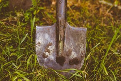spade on the grass. Close-up photo of a shovel on grass. spade close up photo. A shovel stands rooted to the ground in the garden. vintage photo processing