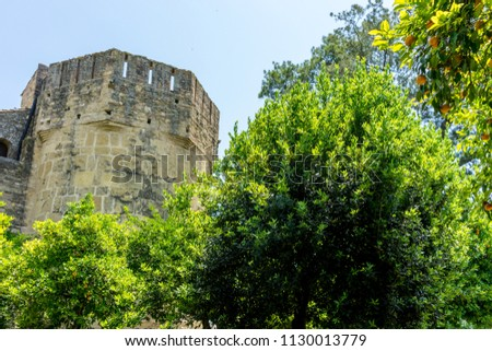 Spain, Cordoba, Europe,  LOW ANGLE VIEW OF TREES AND PLANTS AGAINST SKY #1130013779