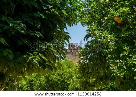 Spain, Cordoba, Europe,  TREES AGAINST CLEAR SKY #1130014256