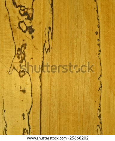 SPALTED BEECH WOOD