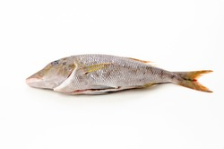 Spangled emperor fish on white background