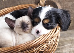 spanie puppy and kitten