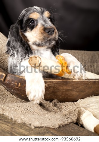 spaniel puppy  holding in its claws a scroll with a declaration of love