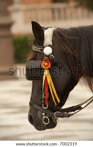 Spanish brown horse in Sevilla. Background defocused. - stock photo