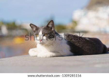 Spanish cat sunbathing near the beach #1309285156