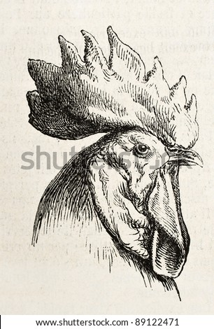 Spanish chicken head old illustration. Created by Jacque, published on L'Illustration, Journal Universel, Paris, 1858