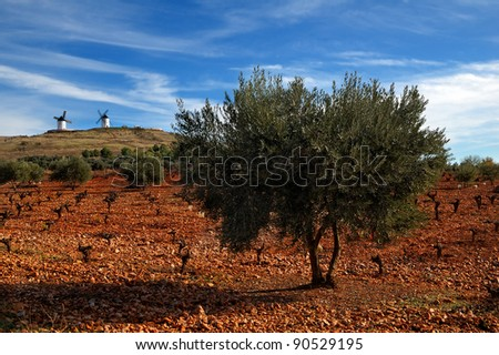 Spanish field with vineyard, olive trees and historical windmills