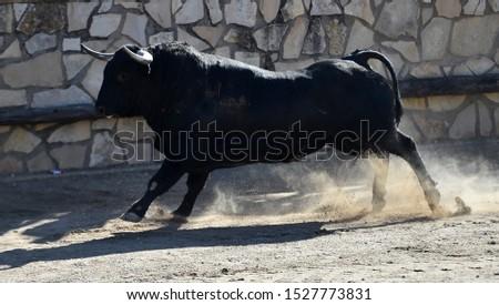 Spanish fierce bull in bullring arena #1527773831