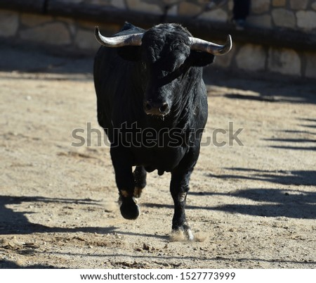 Spanish fierce bull in bullring arena #1527773999