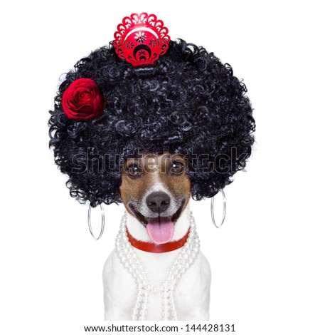 spanish flamenco dog with very big curly hair and big smile