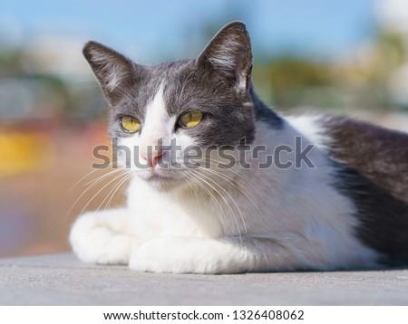 Spanish lazy cat sunbathing near the beach #1326408062