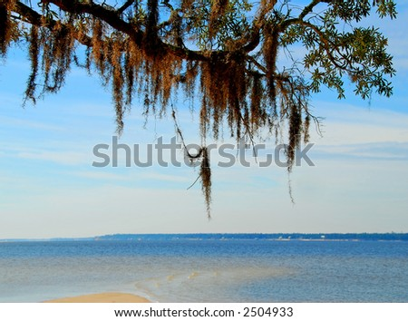 Spanish Moss at Shore