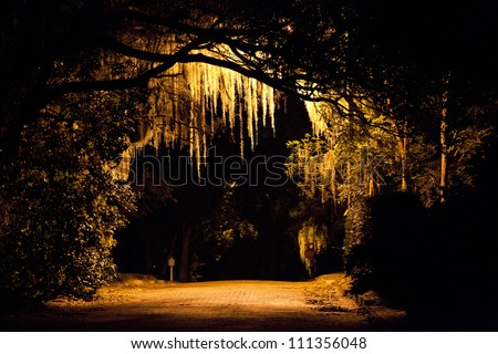 Spanish moss hangs from large live oaks all throughout Winter Park, FL. An evening stroll portrays its somewhat haunting appeal in front of the streetlight.