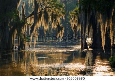 Spanish moss in the Louisiana Bayou
