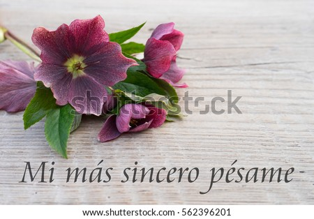 spanish Mourning card with purple hellebores and text: my heartfelts sympathy /  my heartfelt sympathy / Mourning card