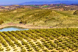 Spanish nature landscape. Embalse del Guadalhorce and surrounding countryside with olives trees. Ardales Reservoir, Malaga Andalusia, Spain
