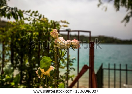 Spanish Rose by the Lake #1336046087