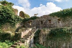 Spanjola Fortress Ruins, empty staircase leading to the walls, mountain goat on the wall. Herceg Novi, Kotor Bay, Montenegro.