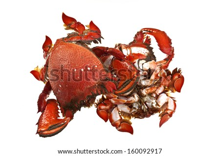 Spanner Crabs - stock photo