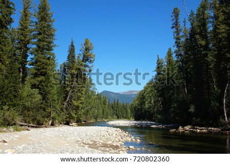 Sparking Konyi river in a mountain spruce forest on a sunny day in early autumn. Firs with sunbeams on the stone river bank against a bright blue sky. Khakassia, Russia.