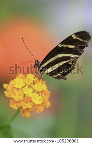Sparkling colorful composition of butterfly