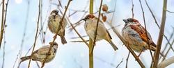 sparow bird on a branch