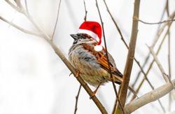 sparow bird with santa cap on a branch