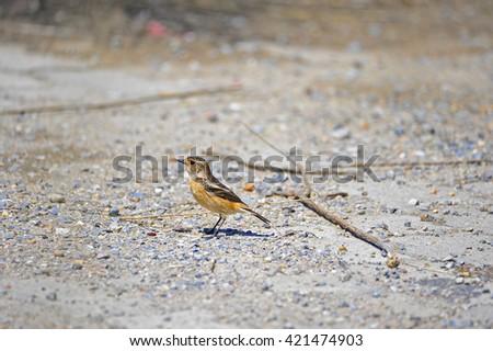 sparrow #421474903