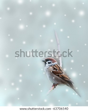 sparrow bird in winter