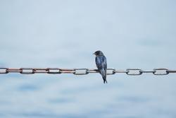 Sparrow, birds ..