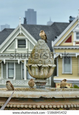 sparrow birds on a stone fountain near to painted ladies in san Francisco California United States of America Stok fotoğraf ©