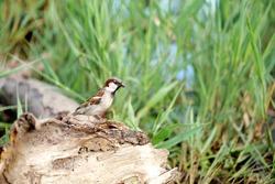 sparrow birds wildlife nature fauna