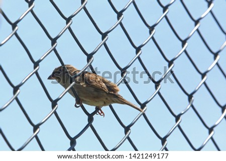 Sparrow is the name given to non-migratory, conic-billed bird species that form the Passeridae family, living in close proximity to humans. #1421249177