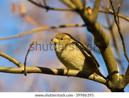 Sparrow on a tree branch in sunny autumn day