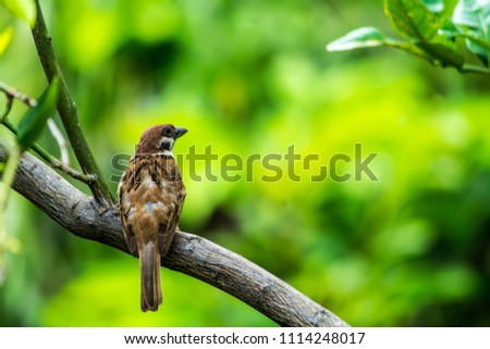 Sparrow on the tree - Shutterstock ID 1114248017