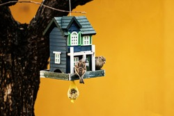 Sparrows feeding - bird feeder hanging from a tree - green birdhouse with sparrows - color background