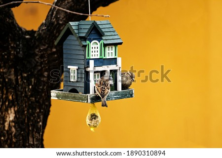 Sparrows feeding - bird feeder hanging from a tree - green birdhouse with sparrows - color background ストックフォト ©