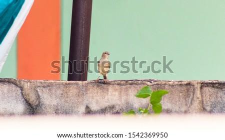Sparrows in various locations, Sparrows #1542369950