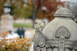 Sparrows sit on sculpture in autumn close up