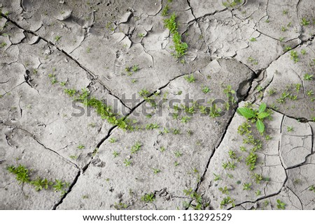 Sparse, small vegetation on the cracked earth. The origins of life. Dry weather.