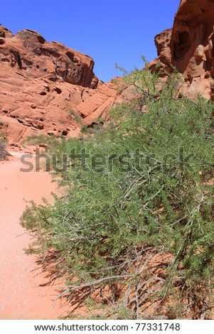 Sparse vegetation among red rocks at Valley of Fire State Park in Nevada