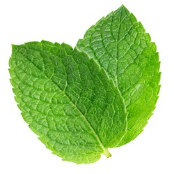 Spearmint leaf isolated on white background. Mint clipping path.