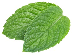 Spearmint or mint leaves on white background. Mint clipping path. Mint macro studio photo