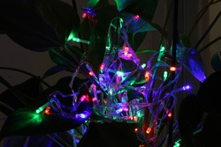Special lights in all kinds of colors on a huge plant in exposure photography