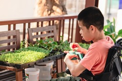 Special need child on wheelchair practicing occupational therapy, Skills development in daily activities by water the plants, Lifestyle in education age of disabled kids, Happy disability kid concept.