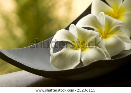 special spa flower