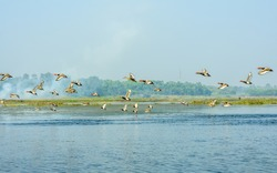 Species of aquatic migratory terrestrial birds of fresh water and habitat spotted in Okhla Bird Sanctuary. A place of birdwatcher delight, a spot for nature lovers for enormous range of wild creatures