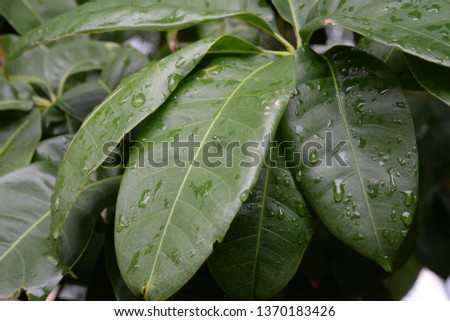 species of vegetation and plants #1370183426