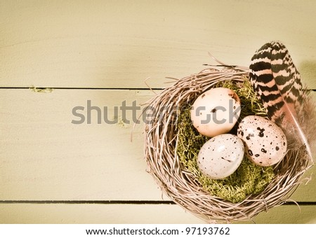 Speckled bird's eggs and a striped feather on moss in a nest of woven twigs on wooden boards