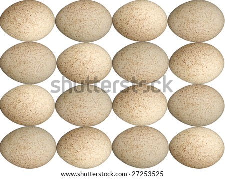 Speckled Egg Background - Brown and White Turkey Eggs